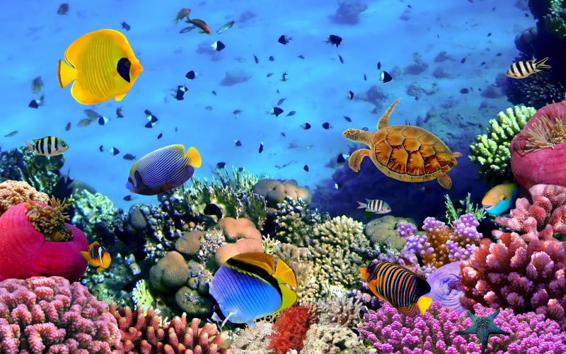 3D Fish-corals-turtle