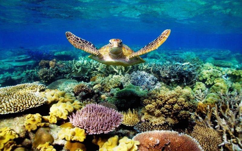 3D Sea-Turtle