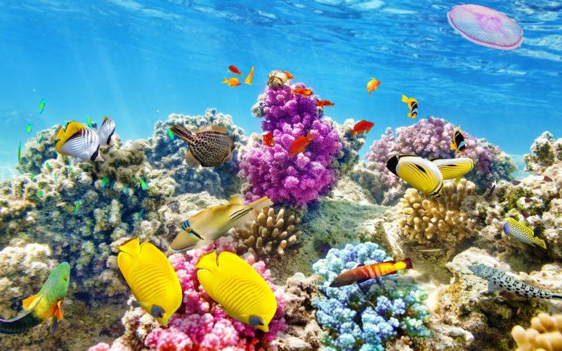 Download-wallpaper-underwater-world-coral-reef-tropical-fishes-ocean-underwater