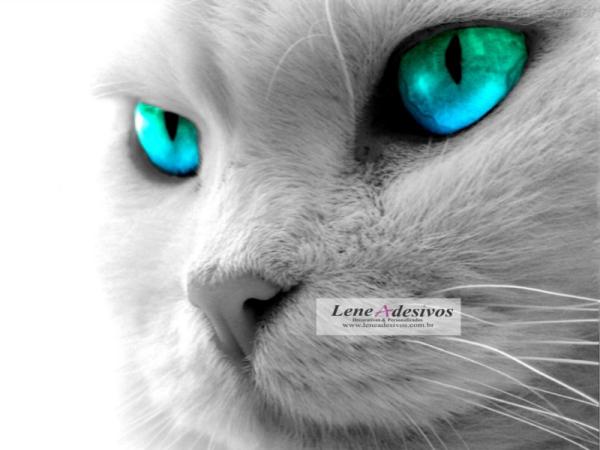 Adesivo Painel de Parede de Gato para Quarto e Sala