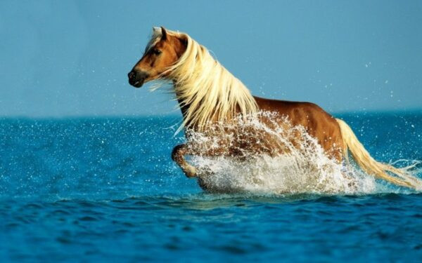 Painel para Parede Adesivo Cavalo para Quarto e Sala
