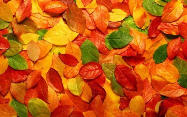 Pastilhas Simples Adesiva de Folhas em tons quentes para decoração de ambientes