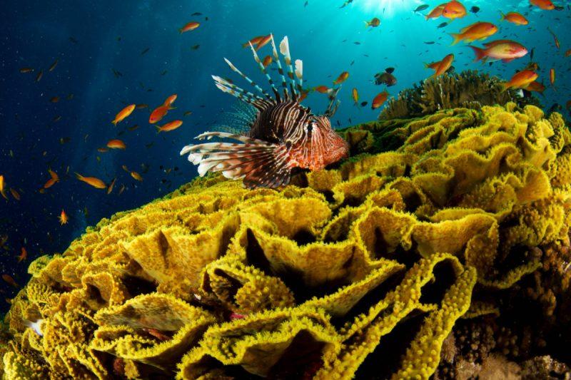Peixe Coral
