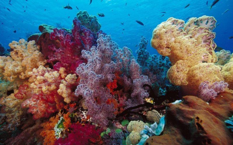 Coral adesivo fundo de piscina
