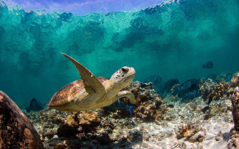 Tartaruga Adesivo fundo de piscina