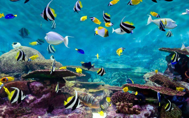 Peixes Fundo do Mar