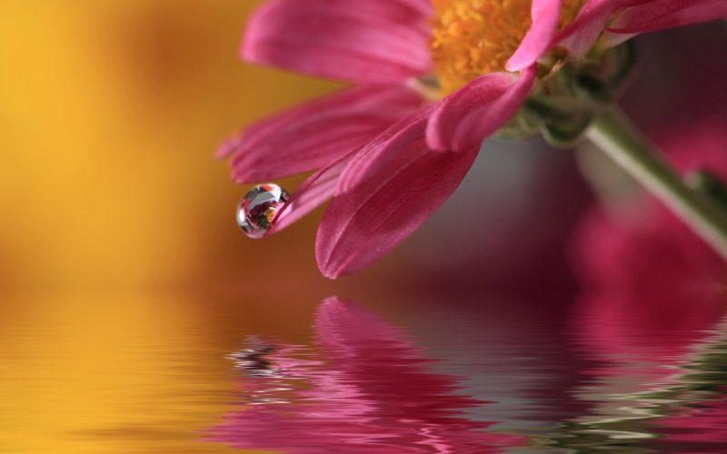 flower-drop-macro-2560×1600